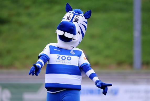 маскот футбольного клуба дуйсбург зебра эннац